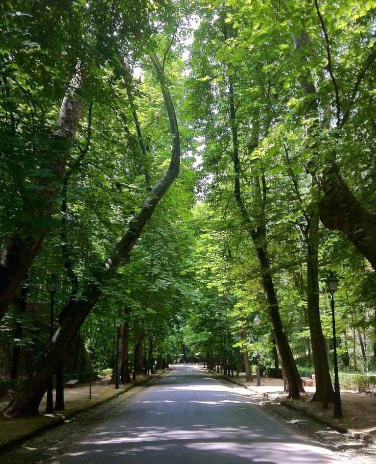 Forest of Alhambra.jpg - 1