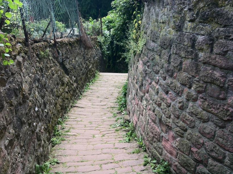 Schlangenweg von philosophenweg Heidelberg June 2015