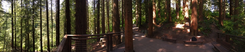 Redwood Observation Deck, Hoyt Arboretum