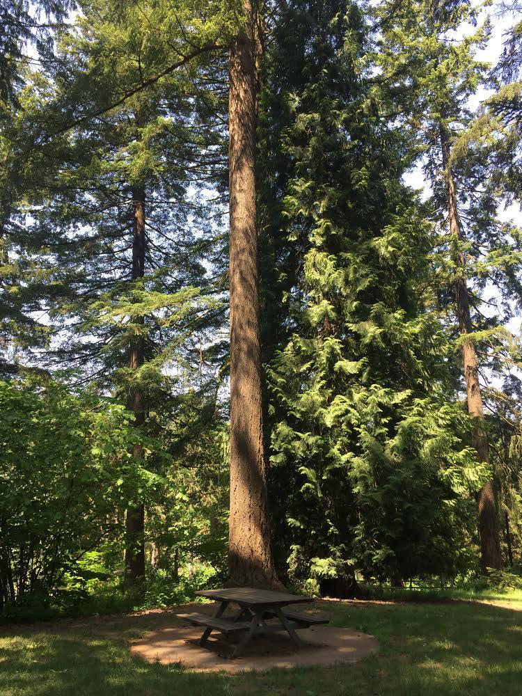 Stevens Pavilion Hoyt Arboretum Portland Oregon 2018